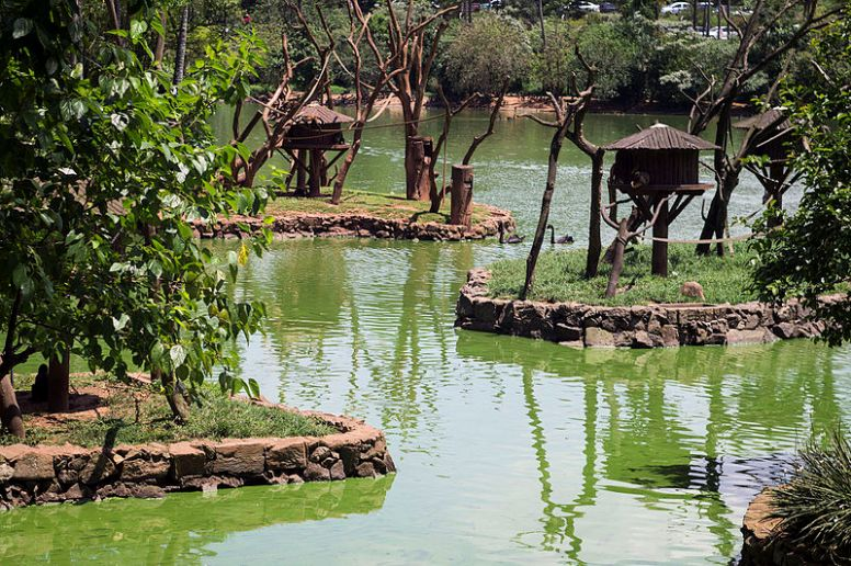 Parque_Zoológico_de_São_Paulo_-_Sao_Paulo_Zoo_-_Ilhas_dos_macacos_-_Monkeys_islands_11540193175.jpg
